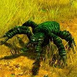 th_IN-HuntingSpider.jpg