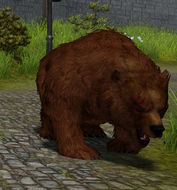 Grizzly - 1.jpg